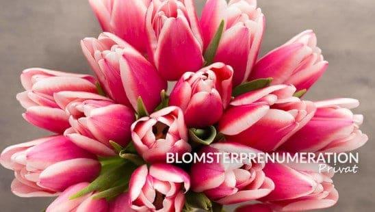 Blomsterprenumeration tulpaner