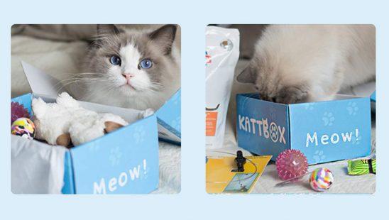 Kattbox Prenumeration