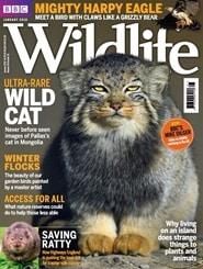 Prenumerera 13 nummer av BBC Wildlife